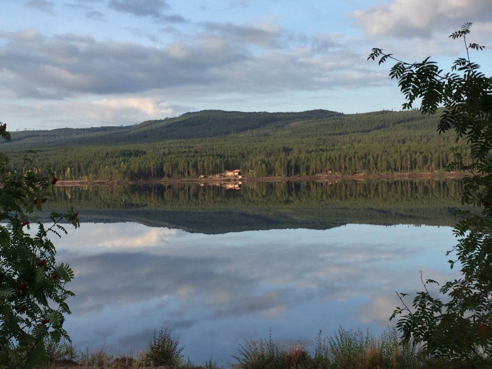 Skogen speglar sig i Åsendammen!
