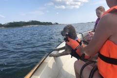 Båthunden Lucca
